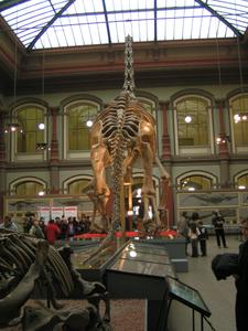 The Humboldt Museum