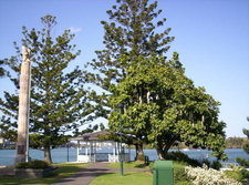 Newstead Park Monument And Brisbane River