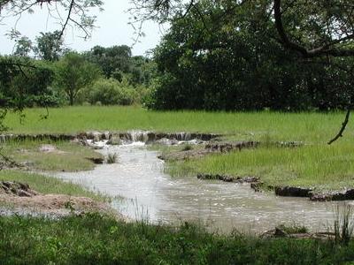 Niangoloko Forest