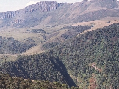Afromontane Forest And Moorland