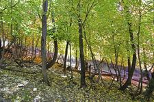 Oak Trail 16 - Tonto National Forest - Arizona - USA