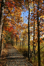 Oberholtzer Trail In Fall