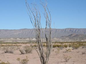 Desierto Chihuahuense