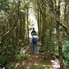 Ogilvies Ridge Loop Track