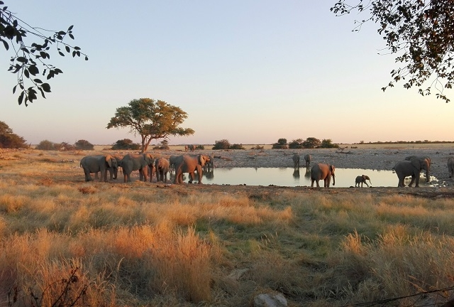5 Day Private Guided Etosha Safari Photos