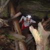 Okupata Caves Track