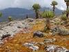 Old Caldera @ Mount Elgon UG