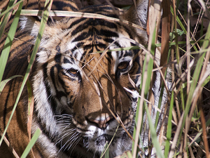 Ranthambore & North India 8 days Trip Fotos