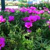Ongkharak Plant Market