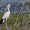 Open Bill At Navegaon Bandh Bird Sanctuary