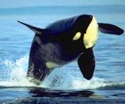 Orca 2 Mod 01 17 12