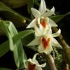 Orquídea y Granja de mariposas