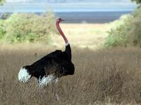 Ngorongoro ,Serengeti And Tarangire National Park Safari