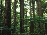 Otanewainuku Forest