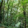 Otapukawa Hut to Otane Hut Track