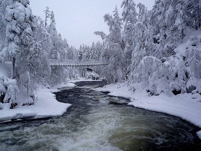 Oulanka National Park Covered In Snow - Finland