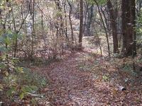 Antiguo Arboretum Forest Of Overton Park