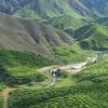 Overview Cameron Highlands Boh Tea Plantation