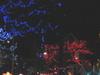 Owen  Sound  Festival Of  Lights