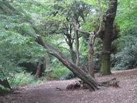 Oak Hill Wood