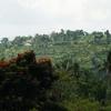 Pachung Bali