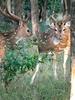 Ballabhpur Santuario de Vida Silvestre