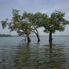 Pakhal Lago
