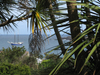 Palms In  Alderney
