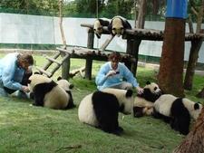 Panda & Volunteer