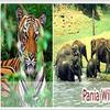 Pania Santuario de Vida Silvestre