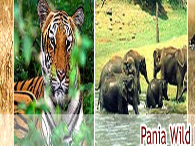Pania Wildlife Sanctuary Junagadh