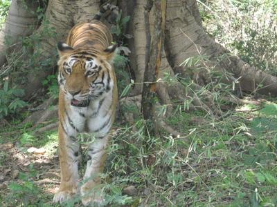 Panidihing Wildlife Sanctuary