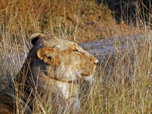 Gir Safari Package Photos
