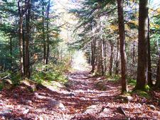 Paradise Trail 271 - Tonto National Forest - Arizona - USA