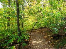 Parker Creek Trail 160 - Tonto National Forest - Arizona - USA
