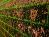 Payyanur Wall