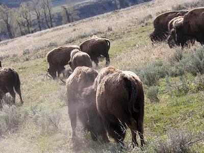 Pelican Creek Trail - Yellowstone - USA