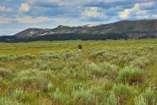 Pelican Valley Trail - Yellowstone - USA