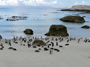 Cape of Good Hope & Penguins Tour Photos