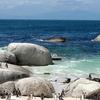 Penguins At Boulder Beach - SA