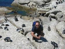 Penguins At Cape Of Good Hope SA
