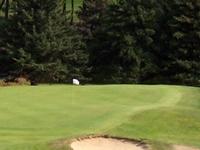Pequabuck Golf Club of Bristol
