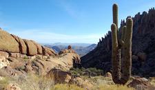 Peralta Trail Cactus Views