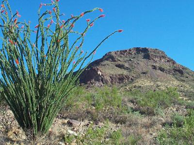 Phoenix Mountains