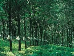 Plantation In Idukki