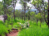 Phu Wiang National Park