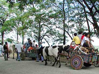 Typical Costa Rican Ox-Drawn Crts Carry Wood