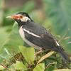 Patna Santuario de Aves