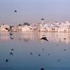 Pigeons At Pushkar Lake