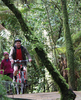 Pikiariki to Mountain Bush Edge Bike Trail